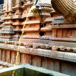 Turmeric water, Big Temple - Thanjavur