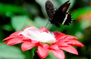 Butterfly Park at  Bangalore